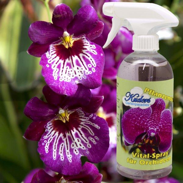 Kuders® Vital Spray für Orchideen 500ml